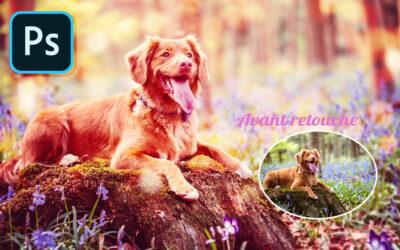 Comment retoucher les photos de votre chien ou votre animal de compagnie sur Photoshop ?