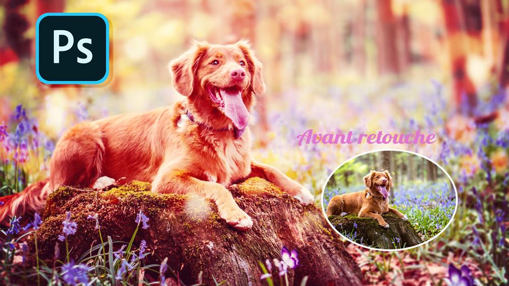 Retouche photo d'un chien sur Photoshop